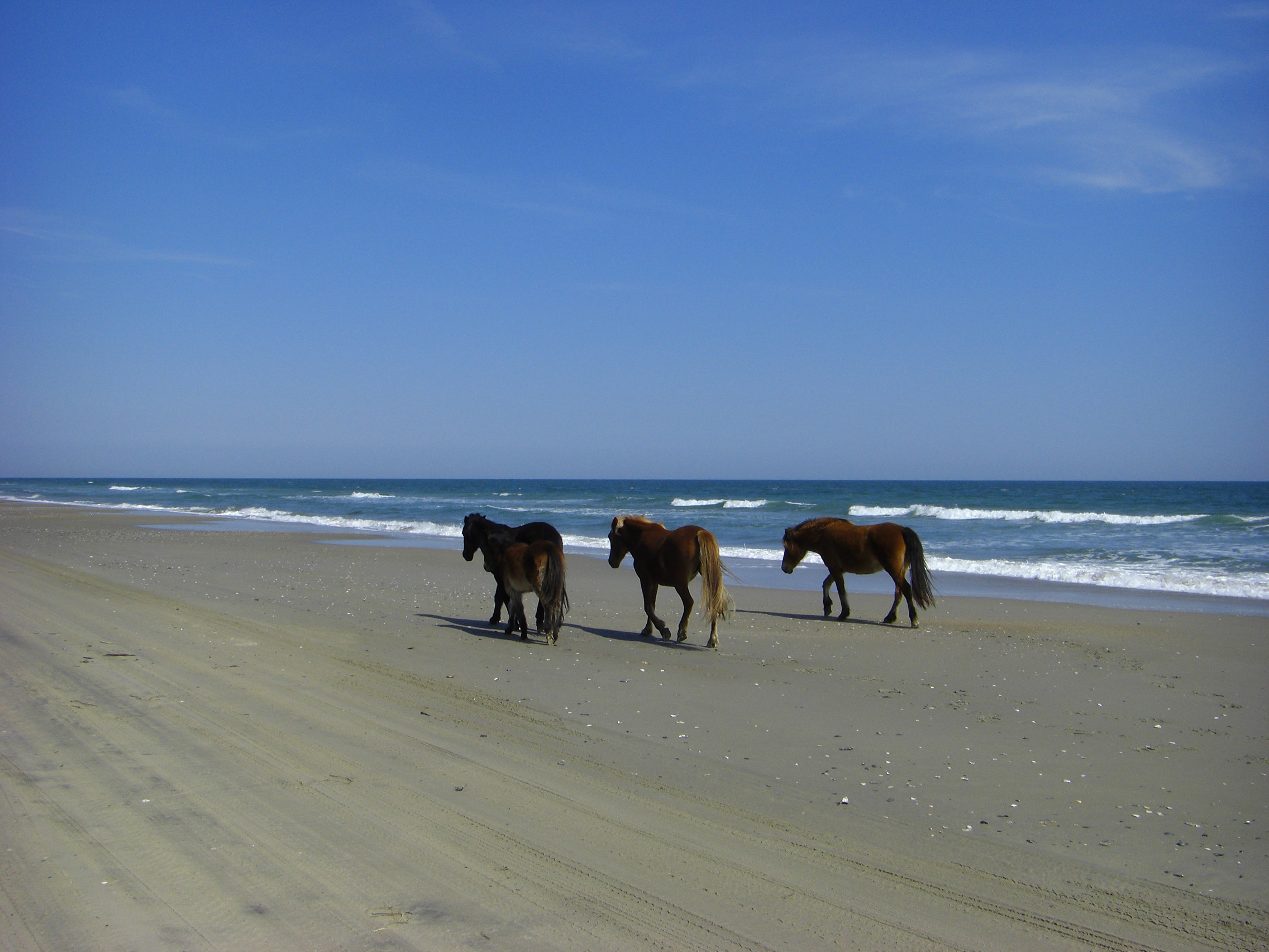 Carova beach named 2 most secluded beach in the us