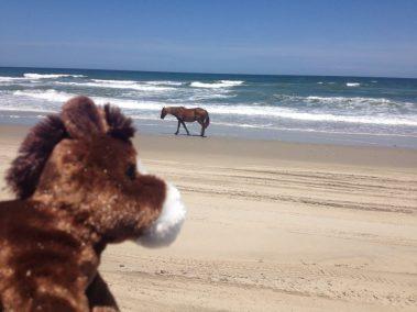 Twiddy Horse w: wild horse
